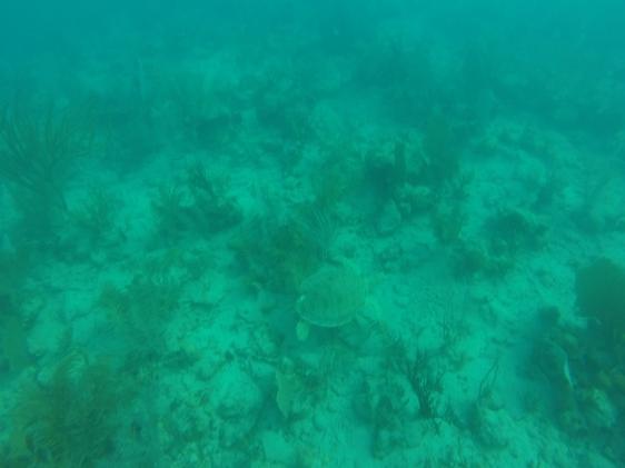 Ena halvan av vårt sköldpaddepar