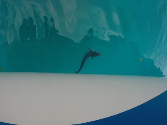En haj som bodde under vår båt
